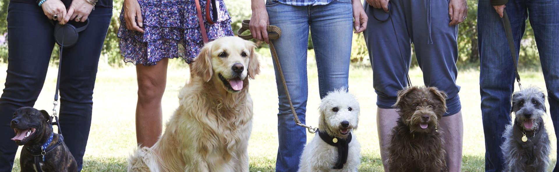 Advanced Dog Obedience Training Aurora IL