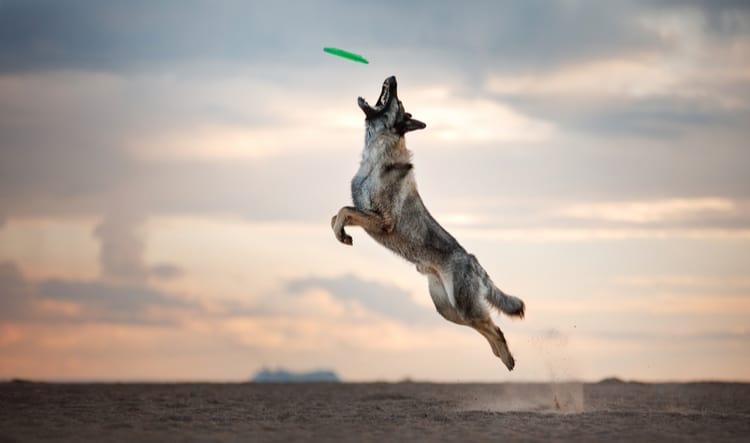 Dog Agility Training Aurora IL Woofbeach Bay Illinois