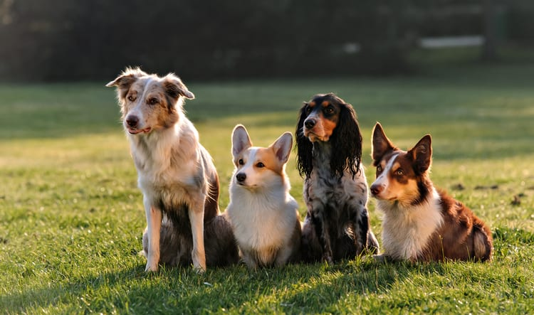 Dog Training Aurora IL